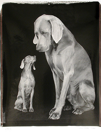 William Wegman, Little/Big, 2000