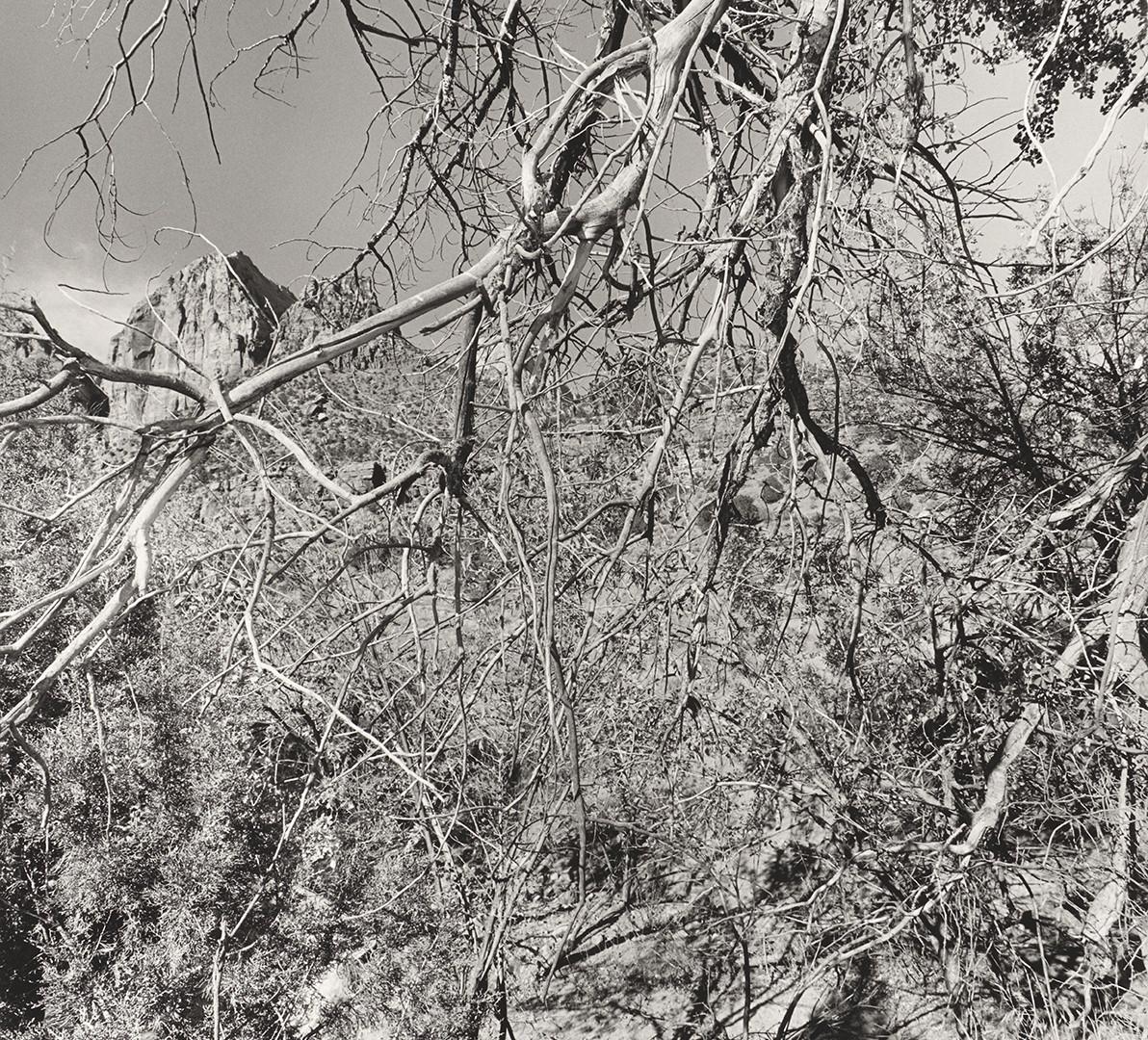 Lee Friedlander, Zion National Park, Utah, 2003