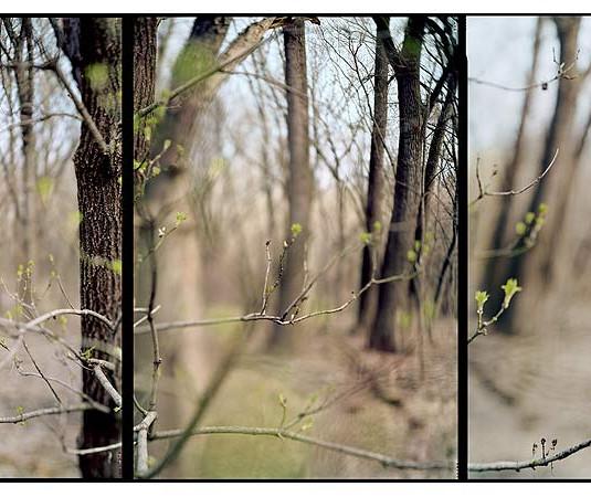 JoAnn Verburg, Hidden Falls Triptych, 2012