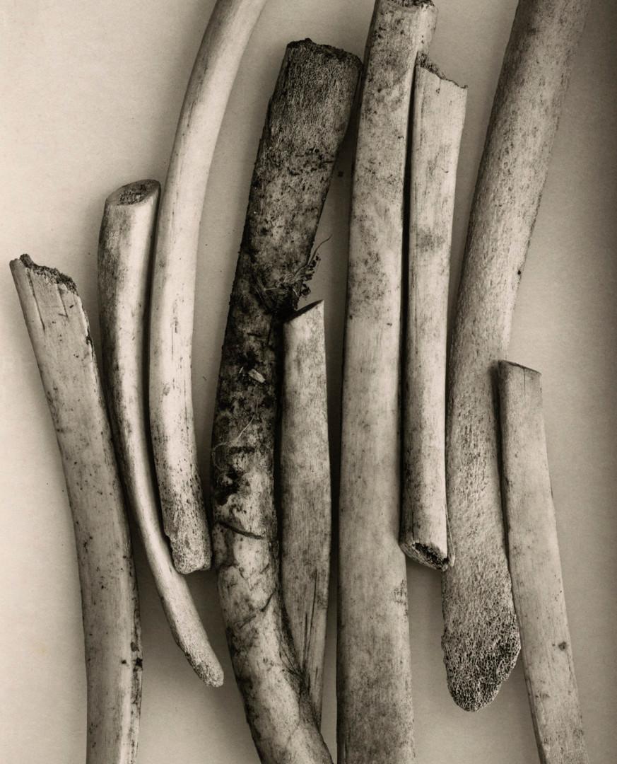 Irving Penn, Bird Bones (Sweden), New York, 1980