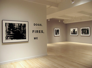 Diana Michener: Dogs, Fires, Me