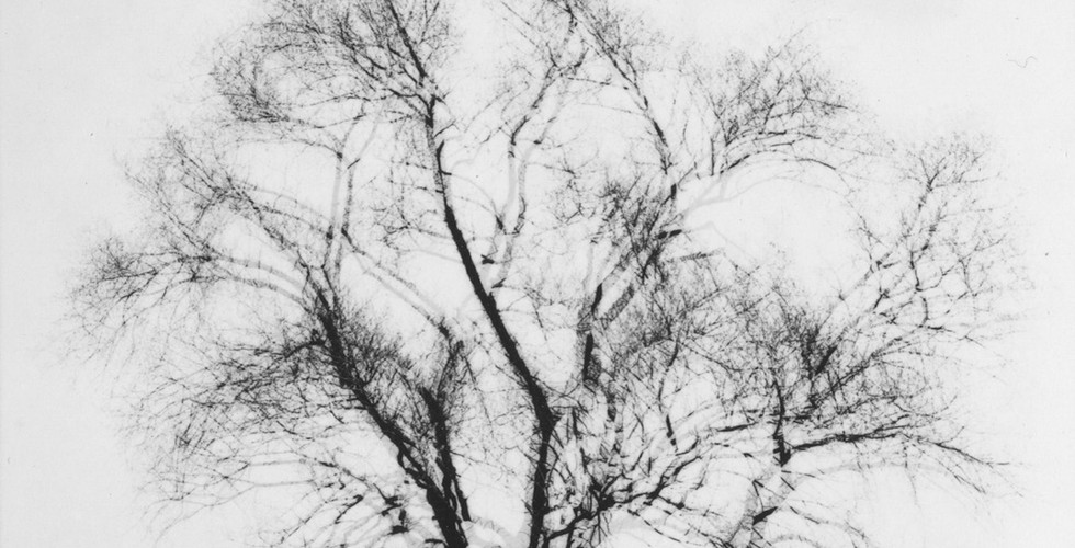 Harry Callahan, Multiple Exposure Tree, Chicago, c. 1956