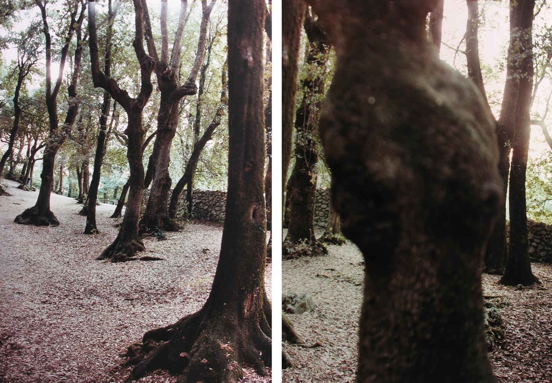 JoAnn Verburg, Sacred Trees (for Bruce), 2000
