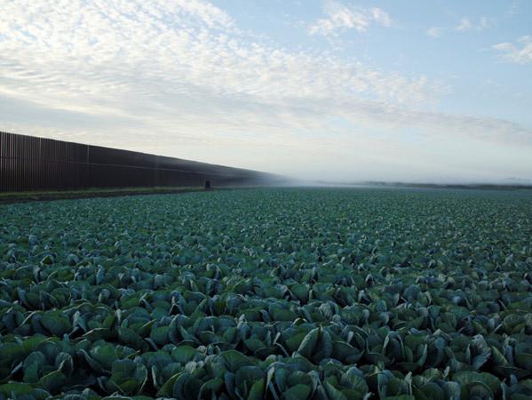 Richard Misrach, Cabbage crop and Wall, Brownsville, Texas / Cosecha de coles y el muro, Brownsville, Texas, 2015