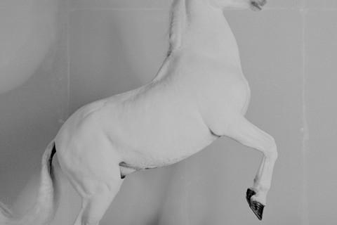 Richard Learoyd, 7 Horses (Horse 2), 2017