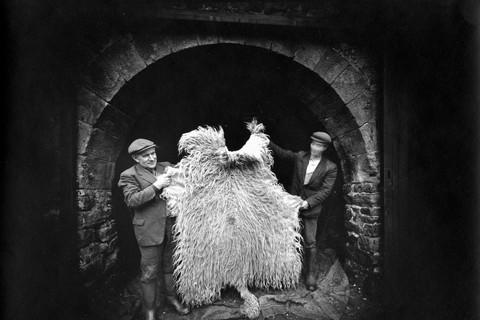 Emmet Gowin, Sheep fleece, Yorkshire, England, 1972