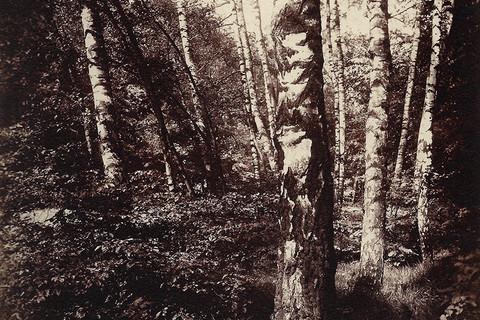 Eugène Atget, Parc St. Cloud, 1919-21