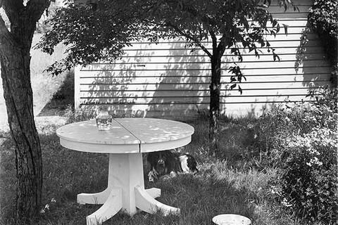 John Szarkowski, Mathew Brady in the Back Yard II, 1953