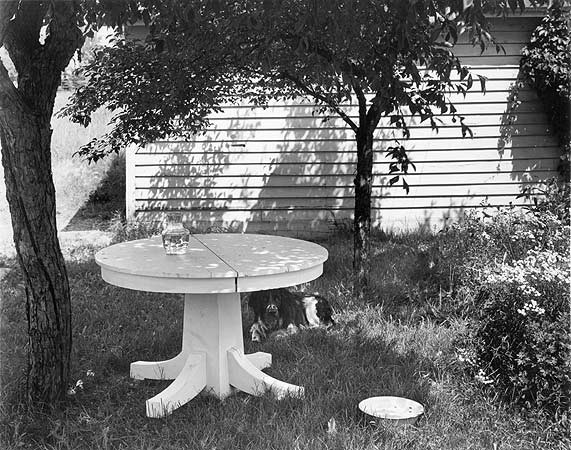 John Szarkowski, Mathew Brady in the Back Yard II, 1953