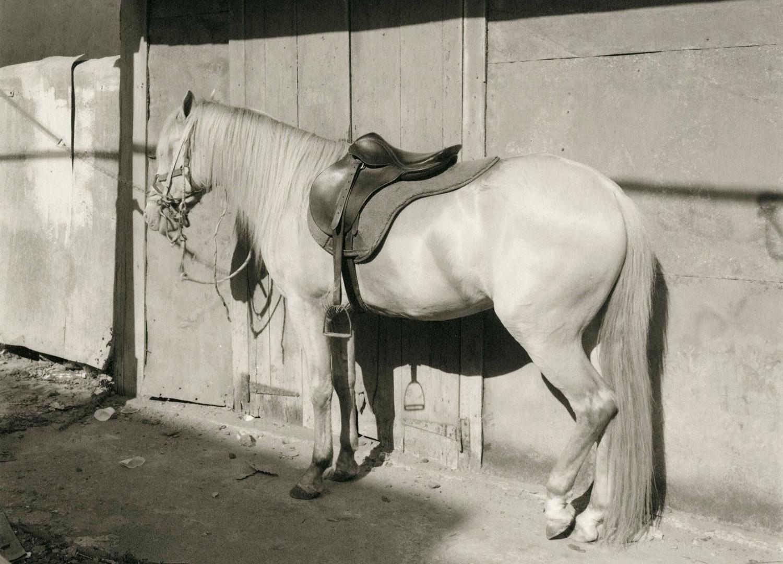 Richard Benson, Hector Morales' Horse Don Pedro, San Juan, Puerto Rico, 1970s