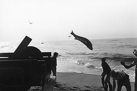 Garry Winogrand, Untitled (fish in mid-air), c. 1967