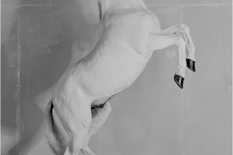 Richard Learoyd, 7 Horses (Horse 6), 2017