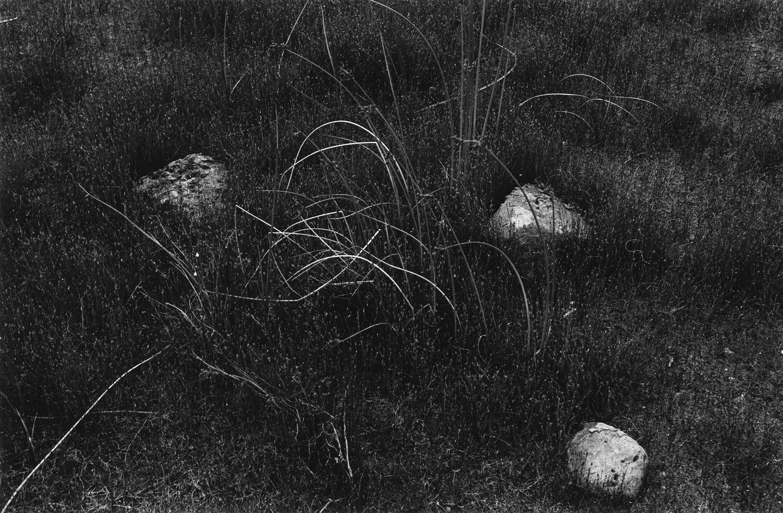 Harry Callahan, Wisconsin, 1958