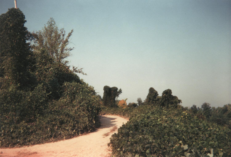 William Christenberry, Winding Road and Kudzu, Tuscaloosa County, Alabama, 1999