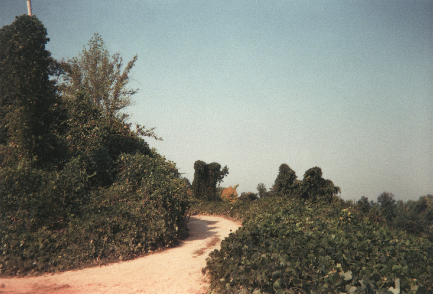 William Christenberry, Winding Road and Kudzu, Tuscaloosa County, Alabama, 1999
