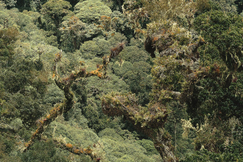 Emmet Gowin, Undisturbed primary mist forest near the continental divide, Chirique Province, Panama, 2008