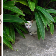 Yoshitomo Nara, NY drawing / Yogyakarta cat, 2010/2011