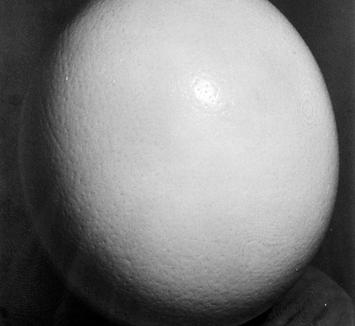 Man Ray (American, 1890-1976), Ostrich Egg, 1944