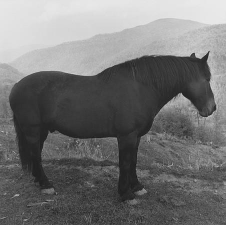 Peter Hujar, Horse, West Virginia, 1969