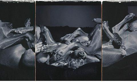 William Wegman, Quarry, 2000