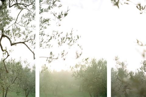JoAnn Verburg Crazy Fog (Nebbia Pazza), 2008