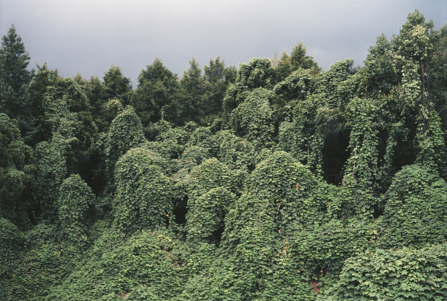William Christenberry, Kudzu with Red Soil Bank, near Akron, Alabama, 1981