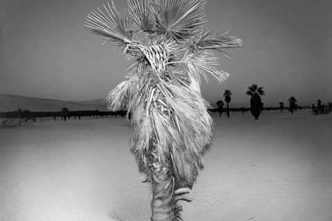 Richard Misrach, Palm #3, 1975