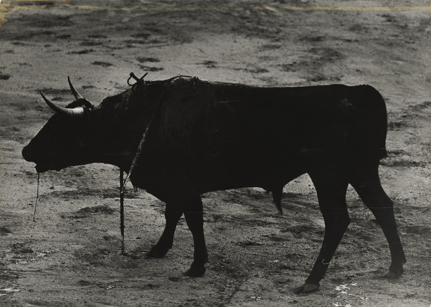 Christer Strömholm, Untitled, 1963