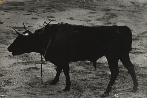Christer Strömholm, Untitled, 1963