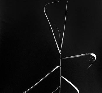 Harry Callahan, Aix-en-Provence, France, 1958