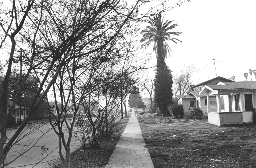 Lee Friedlander, Street Scene (Trees and Houses), Hollywood, California, 1970