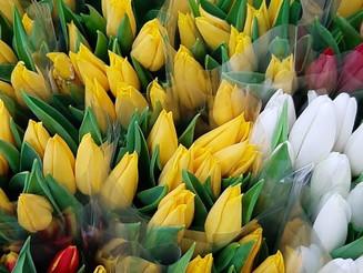 Невероятный отдел срезанных цветов. Заглянем?