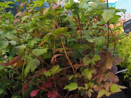 🌿Что приготовил отдел растений открытого грунта в 2020 году?