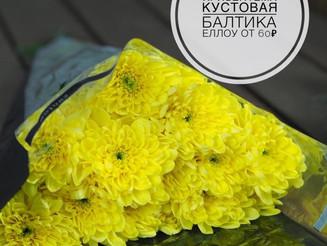 День матери! Необыкновенный ассортимент хризантем и супер цены! 🌼 от 40 рублей! 🌼