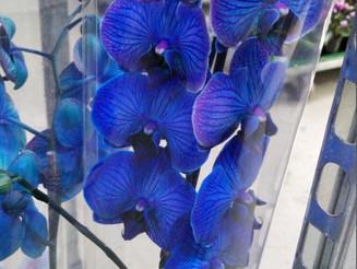 Несколько фото из зала Горшечных Растений !