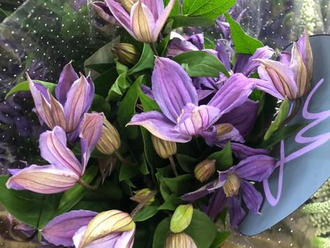🍀Давайте как и всегда заглянем в отдел Срезанных цветов!😃🍀