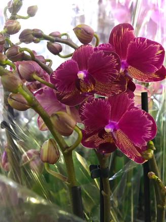 Еженедельный фотоотчет из зала Горшечных растений! 😎🌺🌸🌼