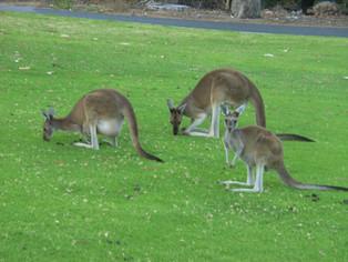 An Alien in Spain - Visits Australia (West Coast - Perth)