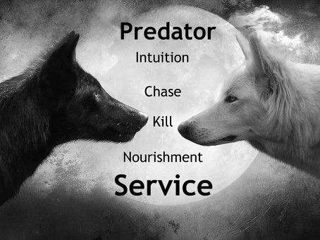 Wolves kill ruthlessly and because they kill without worrying they are in service.