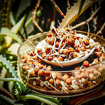 Nutrition Sprouted Dark Chick Peas.jpg