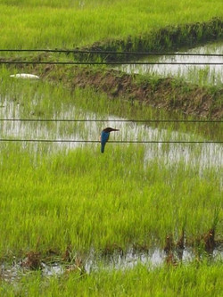 birdlife.jpg
