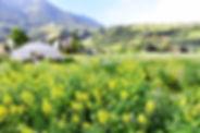 Bienenweide.jpg