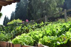 Marschalkhof_Ultental _ Bauerngarten