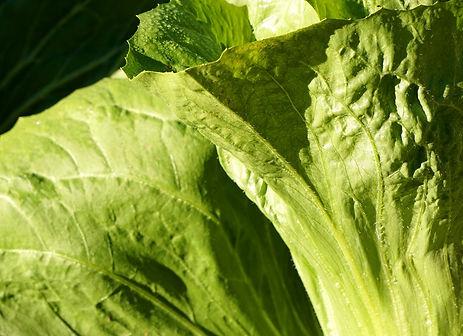 salad-3800343_1920.jpg