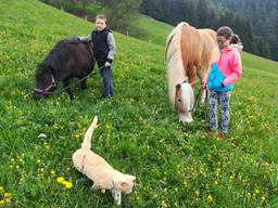 Kuenhof-Urlaub_auf_dem_Bauernhof_in_Vöra