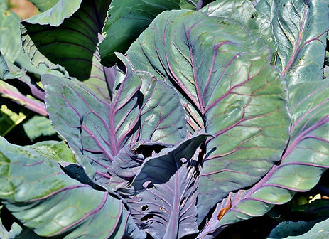 red-cabbage-4398122_1920.jpg