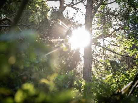 """""""Nach der ersten bewussten Fokussierung sind wir im Wald angekommen."""""""