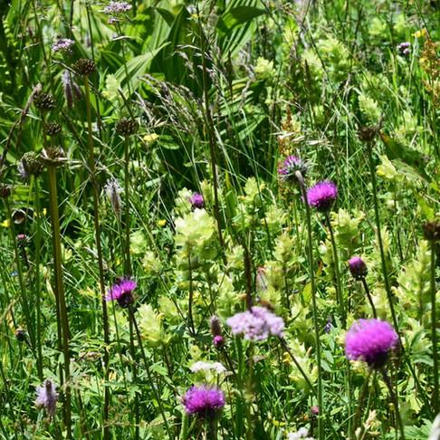 Unsere Blumenwanderung im Ultental