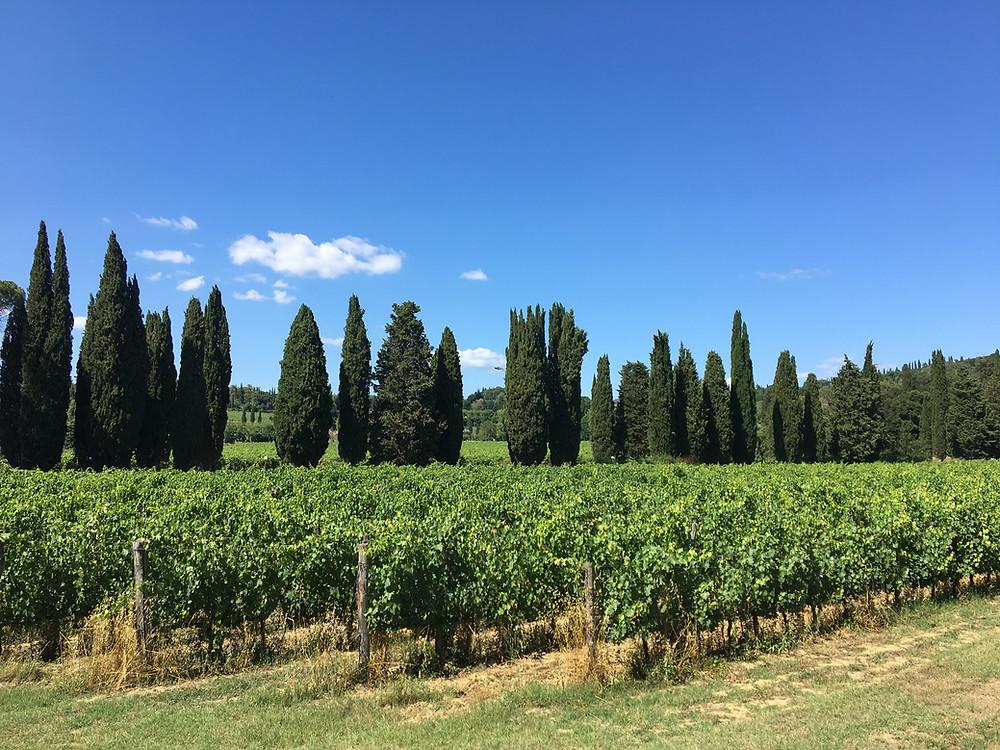 La Striscia vineyard.