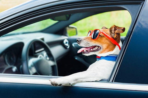 License plate investigation (USA) ナンバープレート調査(米国)